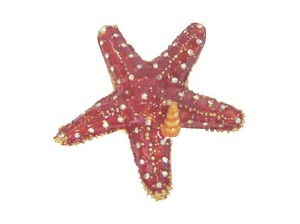 BOX JEWEL STARFISH * UOM: PC * Minimum Order:2
