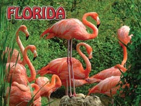 MagnetNET 3D-FLAMINGOS/FLORIDA * UOM: PC * Minimum Order:12